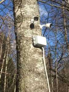 Две камеры видеонаблюдения на дереве